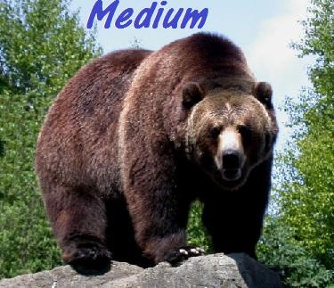 Medium_bear2_medium