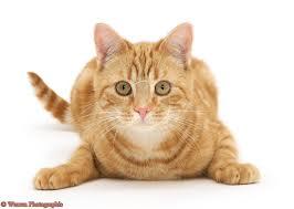 Cat2_medium