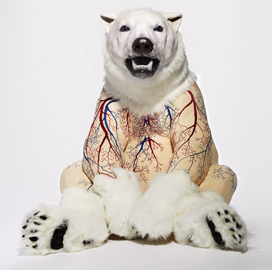 Skinless bear sculptures expose embroidered anatomy - The Verge