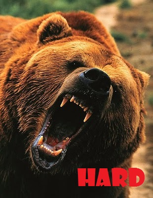 Hard_bear4_medium
