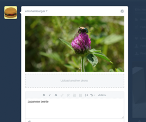 tumblr compose window