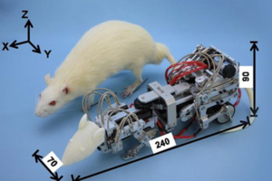 Robot rat