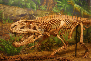 Postosuchus, a Triassic archosaur at the Museum of Texas Tech University, by Dallas Krentzel on Flickr, CC-BY-2.0. 