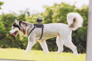 sony dog camera (impress watch)