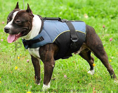 Pitbull-vest-pitbull-dog-coat-pitbull-jacket_lrg