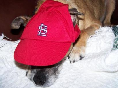 St-louis-cardinals-dog-hat-2851