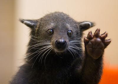 Bearcat_medium