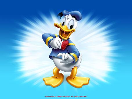 Donald-duck-wallpaper-disney-6638047-1024-768_medium