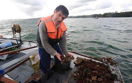 Oyster-fishing-460_1109905c_medium