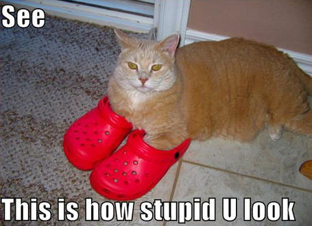 Lolcat-crocs-thumb-615x446-86738_medium