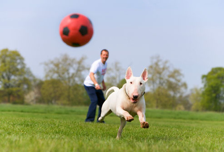 Dog-chasing-ball_medium