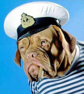 Dog-captain-hat2_medium