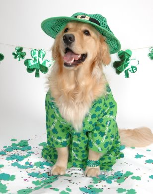 St_patricks_dog_medium