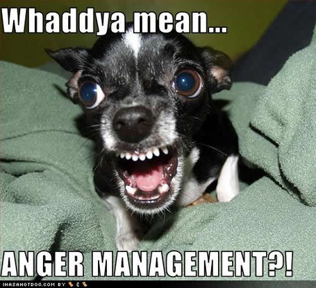 Funny-dog-pictures-anger-management_medium