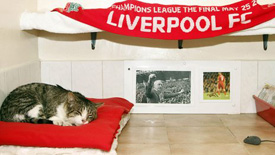 anfield cat adoption stray