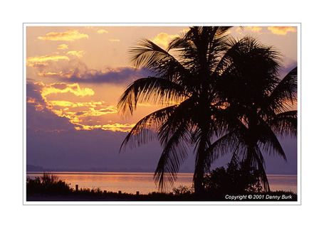 Sanibel_20palms_1_medium