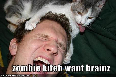Zombie_cat_medium