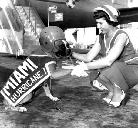 Hurricanedog