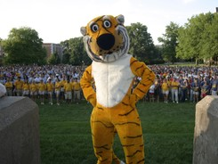 University-of-missouri-traditions-mascot-truman-tiger-mu-t-m-00001md_medium