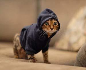 Pet-hoodie_medium