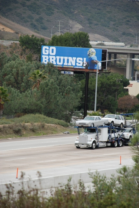 Bruins805_medium