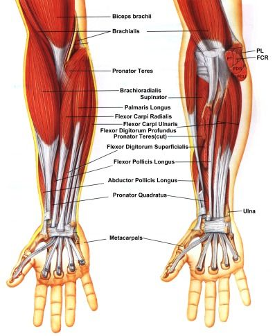 Anatomy1_medium