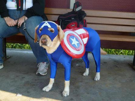 1captamericadog_medium