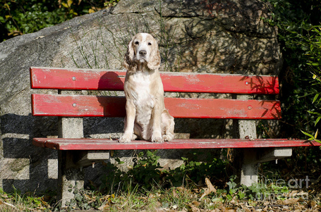 Dog-sitting-on-a-red-bench-mats-silvan_medium