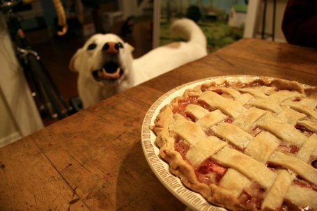 Dog-pie_medium