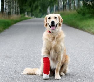 Dog_in_red_cast_medium