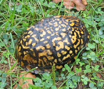 Turtleboxturtle1_medium