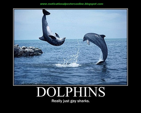 Dolphins_miami_gay_sharks_motivational_posters_online_funny_hot_blogs_wallpapers_inspirational_medium