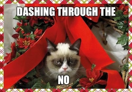 Tard-the-grumpy-cat_medium