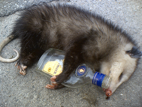 opossum-drunk.jpg
