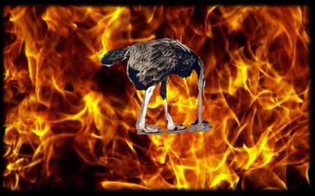 Ostrich_flames_medium