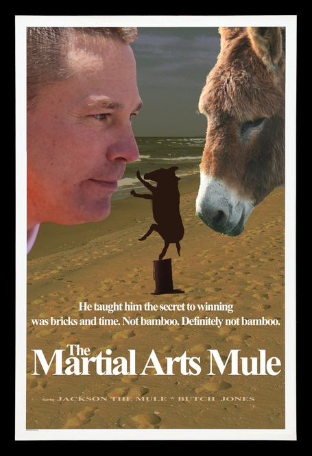 Jackson-the-mule-martial-arts-mule_medium