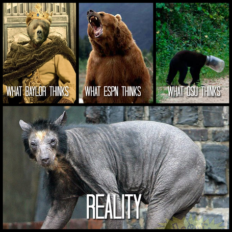 Baylor_bears_perception_medium