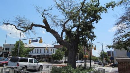 130323000225-auburn-toomers-corner-tree-story-top_medium