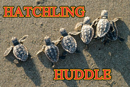 Hatchlinghuddle_medium_medium