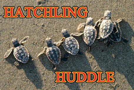 Hatchlinghuddle_medium_medium