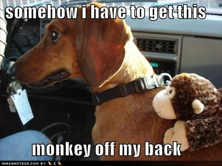 Funny-dog-pictures-need-to-get-monkey-off-back_medium