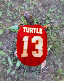 Turtlewr_medium