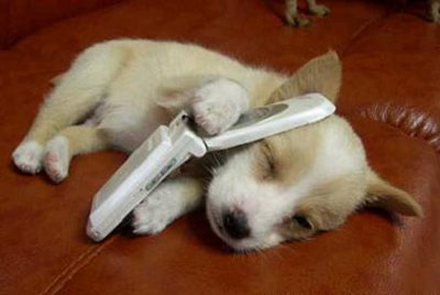 Phone-dog_medium