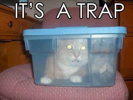 Trapcat_medium