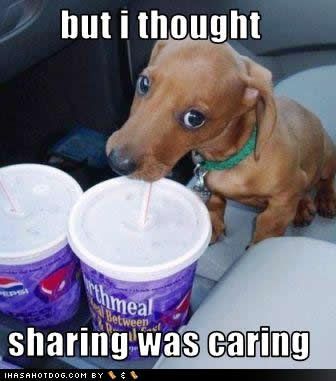 Funny-dog-pictures-sharing-caring_medium