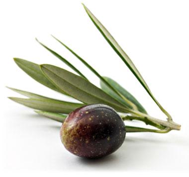 Olive1_medium