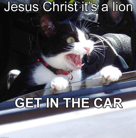 Jesus_christ_its_a_lion_medium