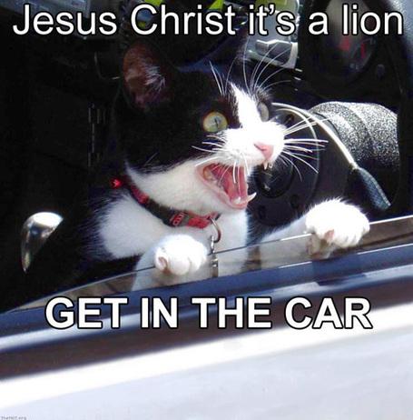 Jesus_christ_its_a_lion_medium