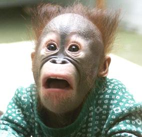 Shocked_20monkey_medium