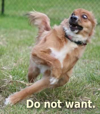 Do-not-want-dog_medium